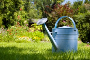 When To Say On Major Lawn Improvement In The Middle Of Water Conservation And Drought