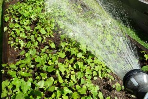 Opinion Piece: Water Conservation Measures While Gardening