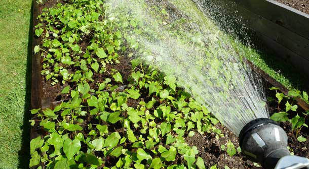 Water Conservation Measures While Gardening
