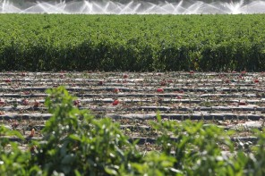 ATTEMPT TO HELP THE FARMERS IN FUTURE BY CONDUCTING A WATER CONSERVATION STUDY IN COLORADO