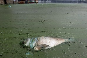 Chemicals Flown into the Fishing Water: The Water Quality in Doubts!