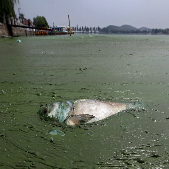 Chemicals Flown into the Fishing Water