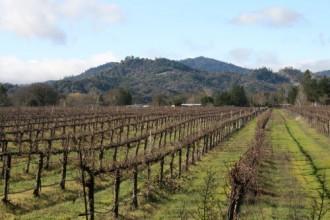 redwood valley california