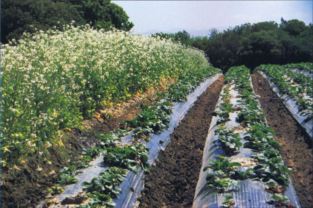Growth predicted in biologically integrated and organic farming
