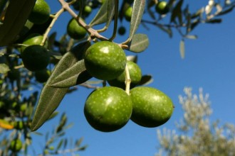 Olive Oil Is A Threat To The Water Supply